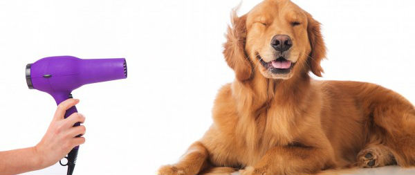 Pet Grooming Business for Sale
